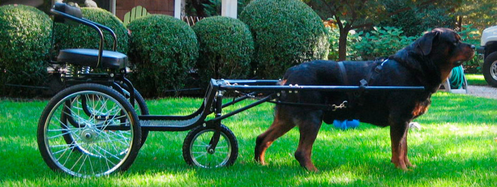 canine cart for dogs