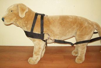 Dog Cart and Harnesses